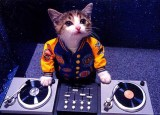 #Caturday Turn your kitty into a DJ